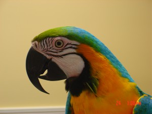 healthy macaw